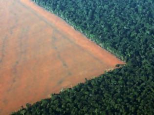 Φωτογραφία για Το τροπικό δάσος του Αμαζονίου μειώθηκε το 2017 δραματικά