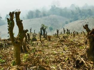 Φωτογραφία για Εξαφανίζεται ο Αμαζόνιος - Με 1 εκατ. γήπεδα ποδοσφαίρου ισούται η έκταση που χάθηκε σε 365 μέρες