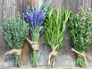 Φωτογραφία για Ελληνικά βότανα: Ποιες είναι οι ευεργετικές τους δράσεις στον οργανισμό μας;