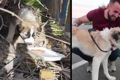 Βετεράνος στρατιώτης επανασυνδέεται μετά από 7 μήνες με το σκυλί που είχε βοηθήσει στη Συρία