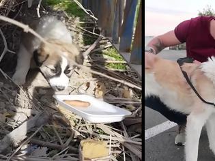 Φωτογραφία για Βετεράνος στρατιώτης επανασυνδέεται μετά από 7 μήνες με το σκυλί που είχε βοηθήσει στη Συρία