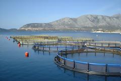 ΝΙΚΟΣ ΜΩΡΑΪΤΗΣ βουλευτής ΚΚΕ: Οι υδατοκαλλιέργειες συγκεντρώνονται σε μονοπωλιακούς ομίλους (VIDEO)