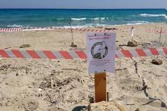 Ζακύνθος: Χρονιά ρεκόρ για τις φωλιές της Caretta Caretta