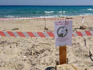 Φωτογραφία για Ζακύνθος: Χρονιά ρεκόρ για τις φωλιές της Caretta Caretta