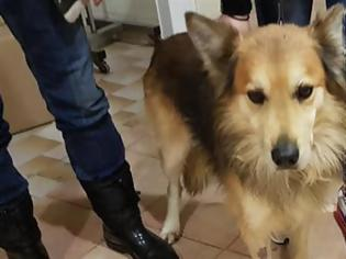 Φωτογραφία για Υιοθετήθηκε ο σκύλος της αδικοχαμένης Αγγελικής
