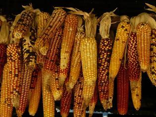 Φωτογραφία για Δεν φαντάζεσαι ποιες ποικιλίες φρούτων και λαχανικών έχουν εξαφανιστεί