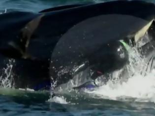 Φωτογραφία για Φάλαινα παραλίγο να καταπιεί δύτη που βρέθηκε στο διάβα της