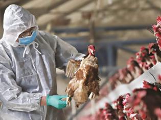Φωτογραφία για Κρούσματα γρίπης των πτηνών στη Βουλγαρία