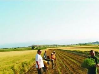 Φωτογραφία για Μόλις το 5,8% των αγροτών στην Ελλάδα είναι κάτω των 35 ετών