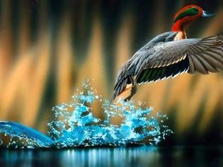 Φωτογραφία για Προς εξαφάνιση οδεύουν έως 1.700 είδη πτηνών και ζώων στα επόμενα πενήντα χρόνια