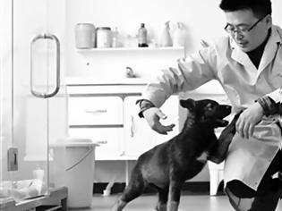 Φωτογραφία για Κινέζοι επιστήμονες κλωνοποίησαν τον πρώτο αστυνομικό σκύλο στην ιστορία