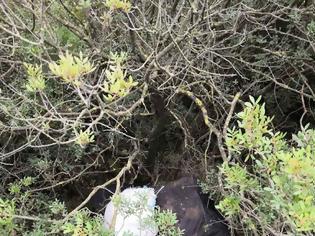 Φωτογραφία για Θεσπρωτία: Χειροπέδες σε 27χρονο που επιτηρούσε καβάντζα με 57 κιλά κάνναβη
