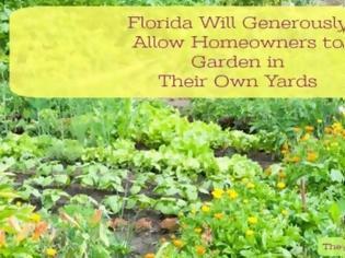 Φωτογραφία για Miami Shores Residents Cited For Front Yard Vegetable Garden