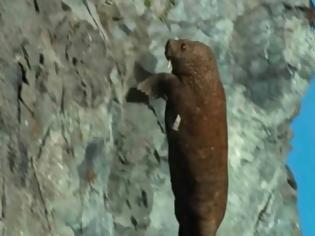 Φωτογραφία για Σκληρό βίντεο: Η στιγμή που θαλάσσιος ίππος «αυτοκτονεί» λόγω της κλιματικής αλλαγής