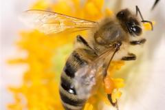 Απίστευτο! Γυναίκα είχε στο μάτι της τέσσερις μέλισσες που τρέφονταν με τα δάκρυά της!