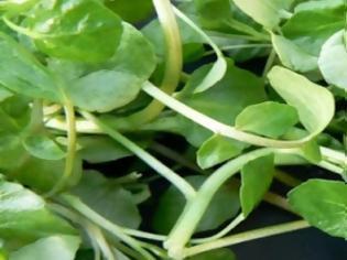 Φωτογραφία για Είναι το πιο υγιεινό λαχανικό στον κόσμο κι όμως…κανείς δεν το γνωρίζει