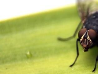 Φωτογραφία για Σπιτική συνταγή για να εξαφανίσετε τις μύγες από το σπίτι σας