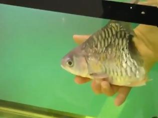 Φωτογραφία για Μισό ψάρι επιβίωσε για έξι μήνες
