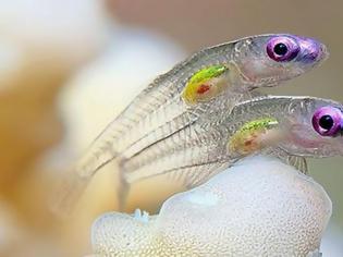 Φωτογραφία για Τα διαφανή ζώα που δεν φανταζόταν κανείς ότι υπάρχουν (Photos)