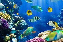 Κι όμως, ο ερωτικός χωρισμός «πονάει» και τα ψάρια!