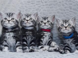 Φωτογραφία για Η γάτα Ουΐνστον Τσόρτσιλ των γατών