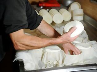 Φωτογραφία για Τυρί από γάλα γαϊδούρας αξίας 1000€/κιλό!