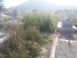 Φωτογραφία για ΚΑΤΑΓΓΕΛΙΑ ΑΝΑΓΝΩΣΤΩΝ: Πνιγμένο στα ξερόχορτα το κοιμητήριο της Βόνιτσας -ΦΩΤΟ