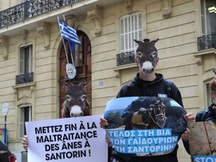 Φωτογραφία για Διαμαρτυρία στο Παρίσι για τα γαϊδουράκια της Σαντορίνης