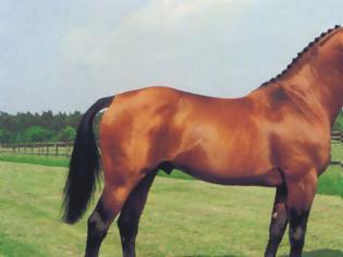 Φωτογραφία για Κοζάνη: Άλογο ...δάγκωσε 70χρονο στον λαιμό