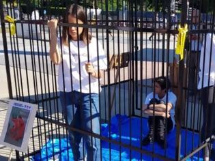 Φωτογραφία για Ελβετία: Έφηβοι κλείστηκαν σε κλουβιά έξω από την έδρα του ΟΗΕ και διαμαρτύρονται για τον Τραμπ