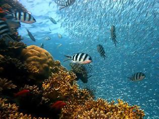 Φωτογραφία για Και όμως ο ερωτικός χωρισμός πονάει ακόμη ...και τα ψάρια