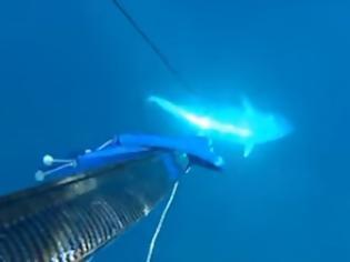 Φωτογραφία για Δείτε πως χτύπησε μια ψαρούκλα Έλληνας ψαροντουφεκάς!! (ΒΙΝΤΕΟ)