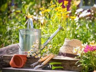 Φωτογραφία για Πώς φυτεύουμε μαρούλι σε γλάστρα και άλλες ερωταπαντήσεις κηπουρικής