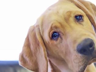 Φωτογραφία για Λιώνεις όταν σε κοιτάει ο σκύλος σου; Σίγουρα το λόγο δεν το έχεις σκεφτεί ποτέ!
