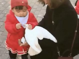 Φωτογραφία για Κοριτσάκι γραπώνει περιστέρι και παίρνει το φαγητό από το στόμα του
