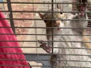 Φωτογραφία για Tάιζε τον σκίουρο του crystal meth για να τον εκπαιδεύσει ως «δολοφόνο»