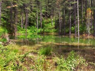 Φωτογραφία για Ιωάννινα: Απαγόρευση κυκλοφορίας σε εθνικούς δρυμούς και δάση μετά τη δύση του ηλίου