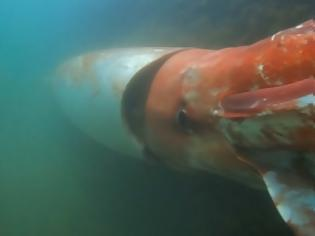 Φωτογραφία για Γιγαντιαίο καλαμάρι τεσσάρων μέτρων καταγράφηκε στα βάθη του Ατλαντικού