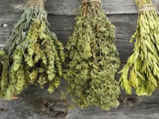 Φωτογραφία για Ουρικό οξύ: Τα βότανα που το «διαλύουν»
