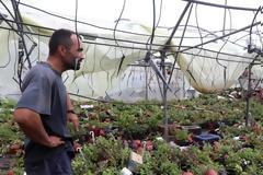 Χαλκιδική: Εκτεταμένες καταστροφές σε καλλιέργειες