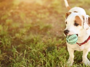 Φωτογραφία για Γιατί (δεν) πρέπει να φερόμαστε στο σκυλί σαν ήταν το παιδί μας