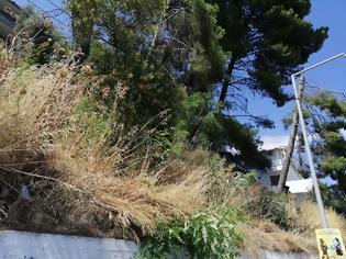 Φωτογραφία για Ακαθάριστο παραμένει το Δασύλλιο με τα πεύκα στο Χοβολιό Αστακού -ΦΩΤΟ