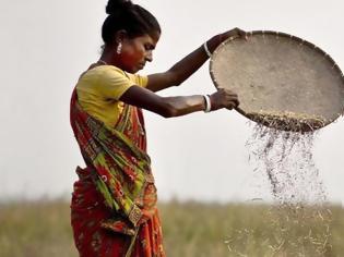 Φωτογραφία για Μέσα σε 3 χρόνια 4.500 γυναίκες αγρότες στην Ινδία έχουν υποβληθεί σε αφαίρεση μήτρας ώστε να δουλεύουν αδιάκοπα