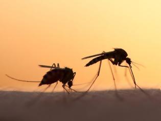 Φωτογραφία για Μέτρα πρόληψης και Οδηγίες για τον ιό Δυτικού Νείλου απο τον Γιατρό ΔΗΜΗΤΡΗ ΓΟΥΛΕ