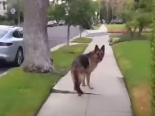 Φωτογραφία για Όταν ένας σκύλος συνειδητοποιεί ότι το αφεντικό δεν είναι πίσω του