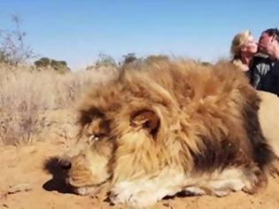 Φωτογραφία για Παγκόσμια οργή για το ζευγάρι που φωτογραφίζεται να φιλιέται μαζί με το λιοντάρι που σκότωσε σε σαφάρι