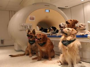 Φωτογραφία για Οι σκύλοι μπορούν να καταλάβουν τι τους λέμε, σύμφωνα με τους επιστήμονες!