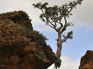 Φωτογραφία για Η φύση στα περίεργά της