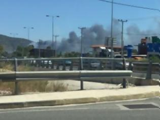 Φωτογραφία για Δήμαρχος Μαρκοπούλου: «Η φωτιά οφείλεται σε εμπρησμό»