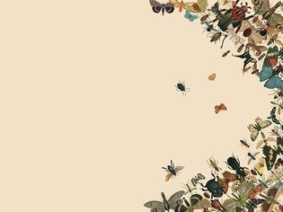 Φωτογραφία για Πού πήγαν όλα τα έντομα;
